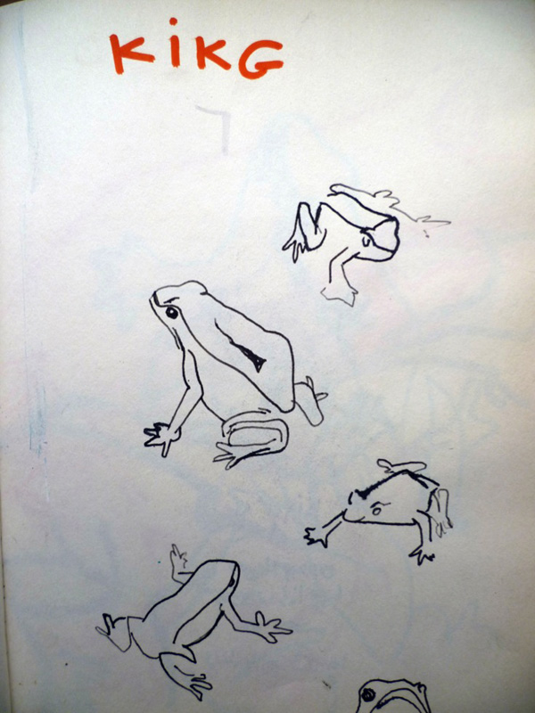 sketches-frog